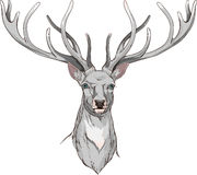 Close-up  deer head with horns Royalty Free Stock Photography
