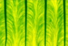 Close up defocused beautiful nature green leaf texture background stock images