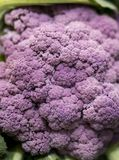Close up of delicious and colourful, ripe and vibrant purple cau. Liflower texture vegetable on a market stall in Yorkshire, UK Stock Image