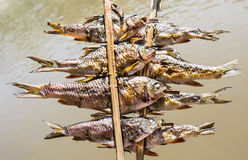 Fish Skewers on Mekong River - Laos Style. Close up of delicious fish skewers grilled on a boat on Mekong River Royalty Free Stock Images