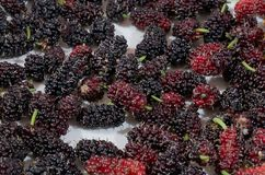 Close Up of Delicious and Sweet Mulberries stock images
