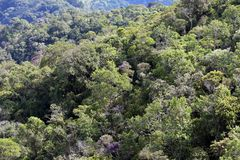 Close-up of dense forest. Close-up of trees in dense forest Stock Images