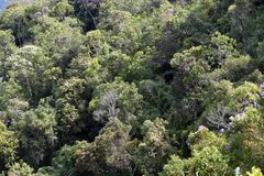 Close-up of dense forest. Close-up of trees in dense forest Royalty Free Stock Photos