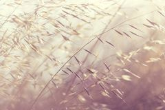 Close-Up, Depth Of Field, Grass Royalty Free Stock Photography