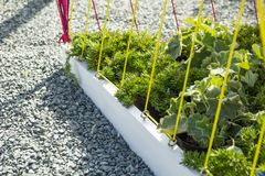 Close-up of a designer flowerbed. Gravel, plants and ropes stock photos
