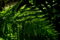 Free Close Up Detail Abstract Of Fern In Shadows. Stock Image - 91836071