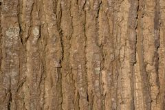 Close up of the bark of a large tree basking in the sun Royalty Free Stock Photo