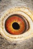 Close-up detail of beautiful eyesight of homing pigeon. Close-up detail of beautiful  eyesight  of homing pigeon royalty free stock photos