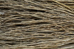 Close up detail of a broom texture. Grunge texture of dry grasson Stock Photography