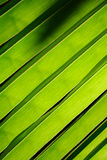 Close up detail coconut leaf texture. Royalty Free Stock Images