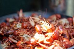Close up detail of cooked red crawdads stock photos