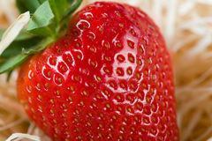 Close-up detail of a fresh red strawberry with leaves Stock Photography