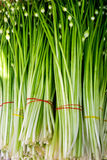 Close-up detail of fresh spring onion vegetables Royalty Free Stock Image