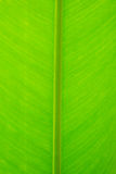 Close up detail of green leaf texture background. Royalty Free Stock Images