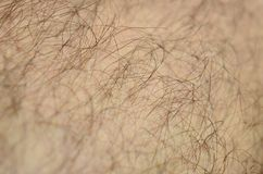Close up detail of human skin with hair. Mans hairy leg.  Royalty Free Stock Images