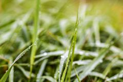 Close-up detail image of grass with water drops Stock Photos