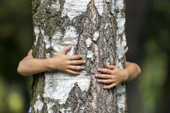 Close-up detail of isolated growing big strong tree trunk embraced from behind by small white child hands on blurred background. Love to nature, care for stock photography