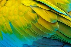 Free Close-up Detail Of Parrot Plumage. Green Parrot Great-Green Macaw, Ara Ambigua, Detail Of Bird Wing Wild Nature In Costa Rica. Gre Royalty Free Stock Photography - 119972617