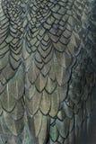 Close up detail of shag plumage Royalty Free Stock Image