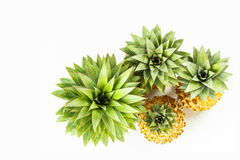 Close up detail at top of pineapple trees Stock Photos