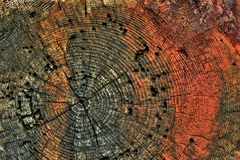 Close Up Detail of Tree Stump with Red Mold Stock Images