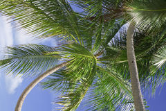 Close up detail of a tropical Royalty Free Stock Images
