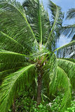 Close up detail of a tropical Stock Photos