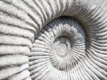 Close up detailed image of ammonite fossil texture. From jurassic period of coast of dorset england stock image