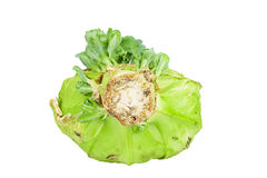 Close up detailed image of cabbage with sprouts Stock Images