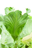 Close up detailed image of cabbage sprouts Stock Photo