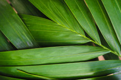Close-up of detailed rainforest jungle leaves for background.  Royalty Free Stock Image