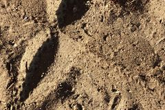 Close up detailed view on sandy ground surfaces in high resolution. Found in germany royalty free stock photos