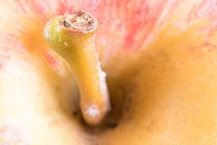 Close up details of an apple fruit Royalty Free Stock Photography