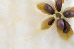 Close up details of an apple fruit Royalty Free Stock Image
