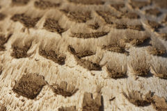 Close-up on details of a parasol mushroom Royalty Free Stock Photography