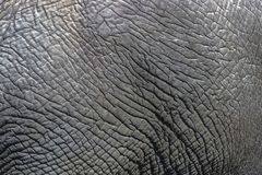 Close up Details of Wild Elephant Skin Background, Stock Images