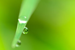 Close up dew drop on green grass Royalty Free Stock Image