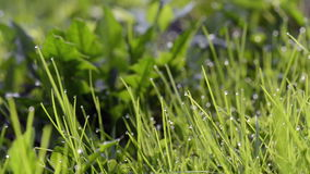 Close-up of dew drops on green grass stock video footage