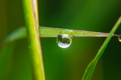 Close up Dew drops on spring grass Stock Photos