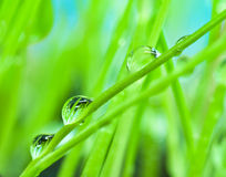 Close-up dew on green grass background Royalty Free Stock Photos
