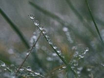 Close-up of Dew on Plant Stock Image
