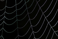 Close Up of a Dewy Spider Web Stock Photos