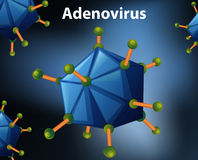 Close up diagram for Adenovirus stock illustration