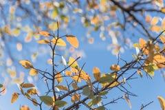 Close-up die de gele kleur van het dalingsgebladerte aga in van Dallas, Texas overweldigen stock foto