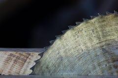 close-up die van blad is ontsproten Royalty-vrije Stock Afbeelding