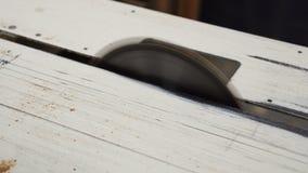 close-up die van blad is ontsproten timmerwerk stock footage