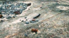 Close-up die van duizendpoot langs rots kruipen stock footage