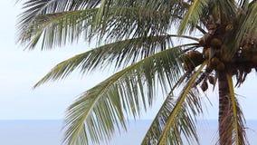 Close-up die van palmblad in de wind blazen stock video