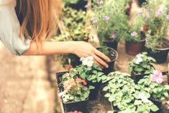 Close-up die van vrouwenhand een pot van bloem houden royalty-vrije stock foto's