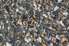 Close-up of Different colorful seashells. Seashell background. Texture of colorful seashells. Royalty Free Stock Photo